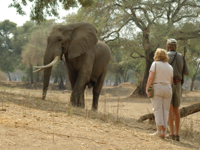 Goliath Safaris