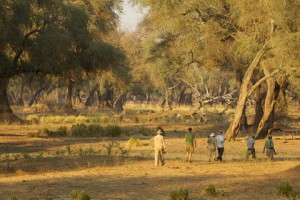 Goliath Safaris Luxury Tented Camp - Walking Safaris
