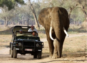 Goliath Safaris Luxury Tented Camp - Slot and friends