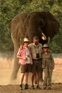 goliath safaris luxury tented camp - stretch elephant