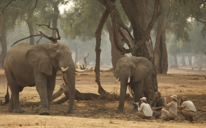 Goliath, Mana Pools, Stretch and guests