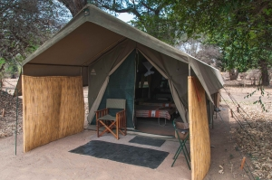 Goliath Tented Camp, Mana Pools, Zebra