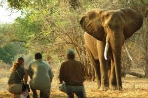 Goliath, Mana Pools, Stretch Elephant